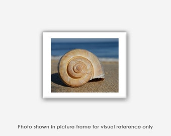 Whelk Sea Shell Photograph, Prints, Wall Art, Blank Photo Greeting Cards, Photo Note Cards, Beach Photography, Nature Cards, Photo Magnets