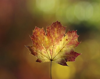 autumn leaf photography, digital photo download _ _ undergrowth background _ nature photo, fall, foliage, forest