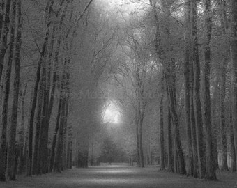 Tree Light, Versailles
