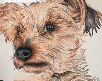 Custom Pet Art