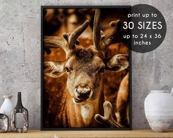 Antler print, deer print, antlers print, deer antler print, deer wall art, wall art, antler art, deer antlers, printable art, photograph, 90
