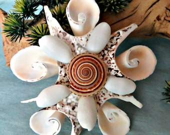 Cut silver lip seashell ornaments with sundial and bubble shells_beach ornaments