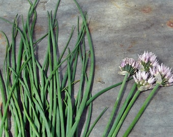 Common Chives Herb Heirloom Garden Seed Non-GMO 100+ seeds Naturally Grown Open Pollinated Gardening