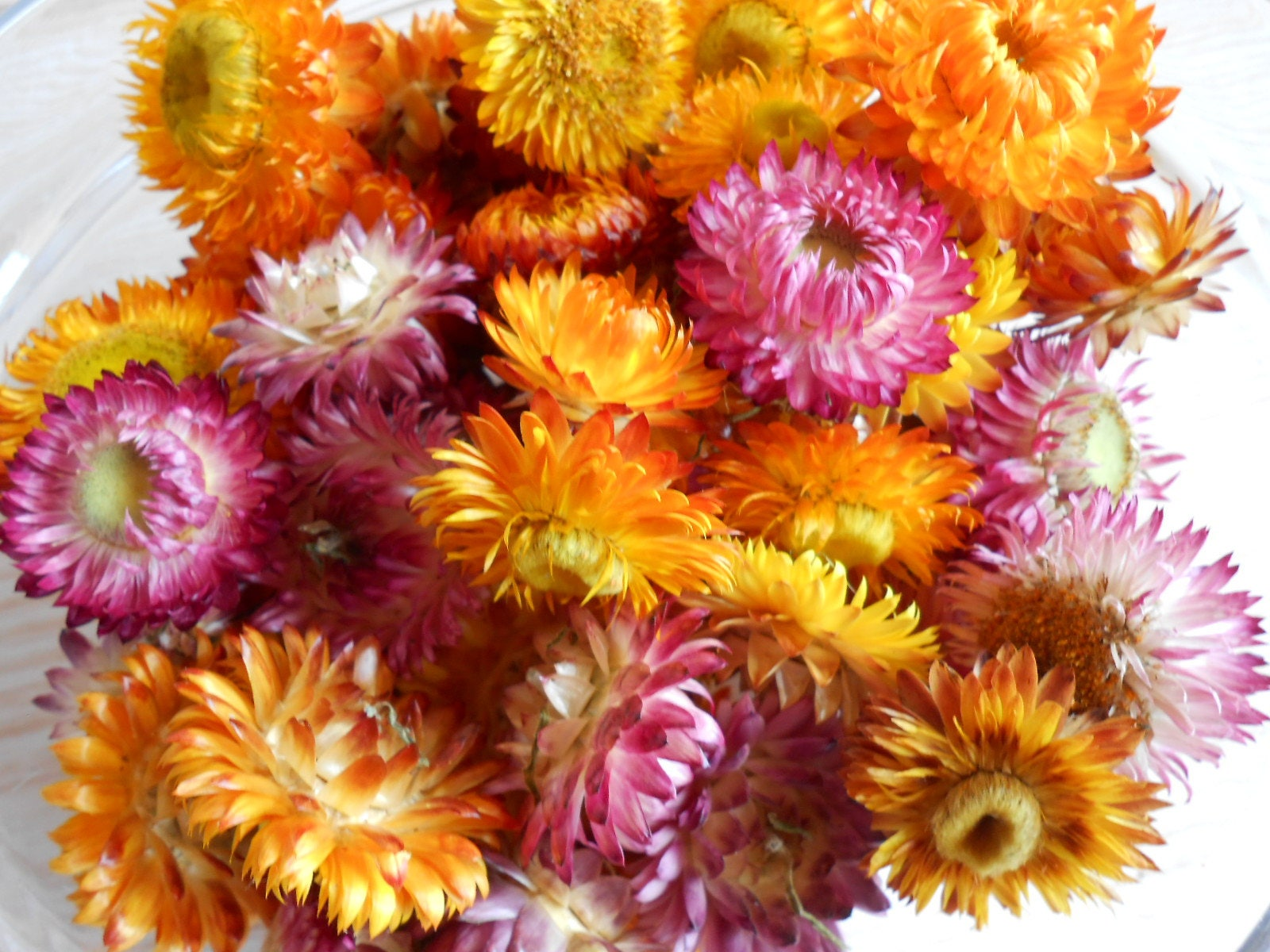 Dried straw flowers mixed size and colors, Small dried flowers ...