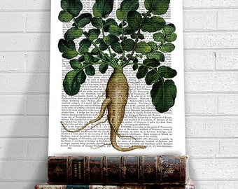 Garden print art - Vegetable Print Parsnip 1 - Nature inspired Gift ideas for mom Botanical art Vintage inspired French kitchen Food art