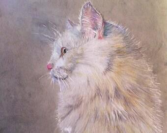 Pearl Cat