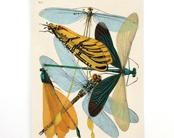 Pull Down Chart - Vintage damselflies Illustration Reproduction. French Seguy Plate 9 Variety of Dragonflies Poster. Entomology CP274cv
