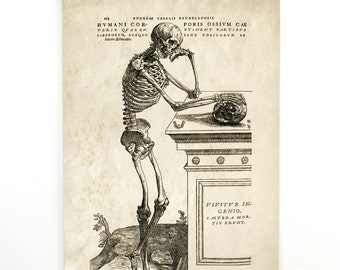Pull Down Chart - Vintage Anatomy Reproduction Print. Leaning Skeleton Diagram Science Biology Human Body by Andreas Vesalius- CP111CV