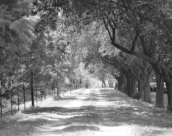 Long Road Home- Photo Print