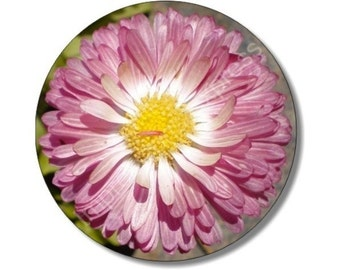 Pink Daisy Flower Round Mousepad