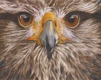 Eagle Eye • colour pencil •  A4 • Original