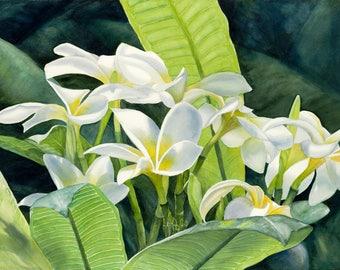 Radiance White Plumeria Painting Art Print