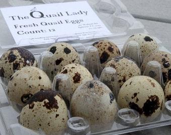 1 Dozen Quail Eggs