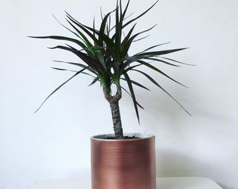 Ribbed metallic pot // Plant Pot // Medium // Desk accessory // Planter // Succulent Pot // Copper // Silver // Gold