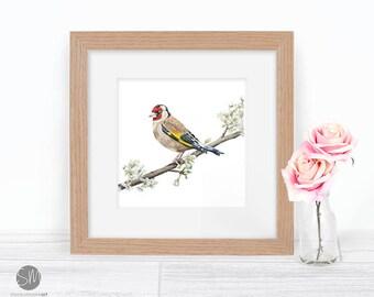 Goldfinch Golden Wedding Anniversary gift Framed British Bird Print Artwork Picture