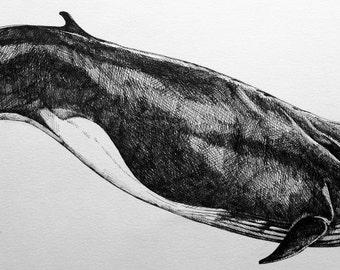"""Letterpress """"fin whale"""" series cetaceans, x 40"""
