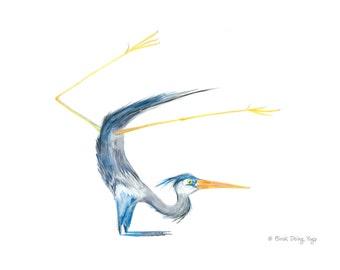 Great Blue Heron Pincha