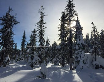 Mt. Hood National Forest Winter Serenity