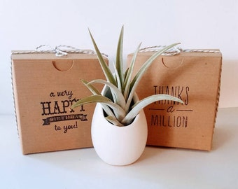 """Air Plant in Ceramic """"Egg"""" Planter, Hanging Air Plant Planter, Love you to the moon and back, Thank You Gift, Birthday Gift"""