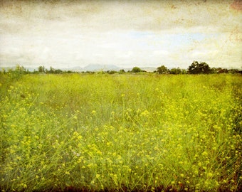 """Landscape photography flower meadow rustic wall art olive green decor california wall art nature photography """"Mustard Field"""""""