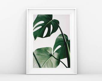 Monstera Leaf Print - Green - Botanical Art - Monstera Poster - Monstera Leaf Wall Art - Printable Poster - Scandinavian & Nordic Art Print