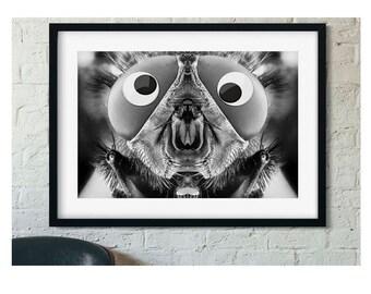 Bug eyes - Gallery print