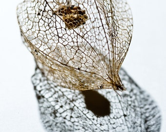 Seed Cages 2 - Fine Art Photography - Wall Décor - Nature Photography
