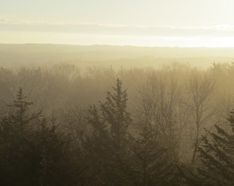 Fog, Trees, Landscape Photography, Outdoor photography, Nature Print