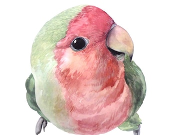 Pwach faced Love Bird - Watercolour Painting