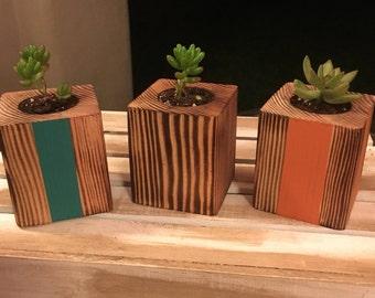 Single Succulent Planter