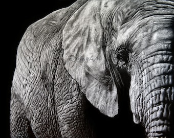 Majestic - Fine Art print of my original graphite drawing of an elephant