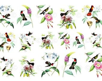 Hummingbird Water Slide Decals, Watercolor Birds, Wedding And Party Decals,  Decorate Flame