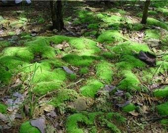 Pillow Moss-Cushion Moss-Sandwich bag of assorted sizes-Pin Cushion Moss-Live Moss