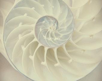 Ocean Dreaming Nautilus Shell Ocean is calling Beach bum Wedding gift Gift Beach house decor Summer decor  color photography home deco