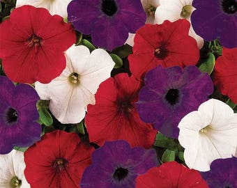 Heirloom Petunia Seeds, Mixed Color Petunia Seeds, Container Gardening, Annual Flower Seeds, Flowers for Hanging Baskets