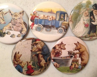 5 Pig Fridge magnets or pinbacks SET 2 w/Vintage pictures Pigs, hogs, 1.5 inch