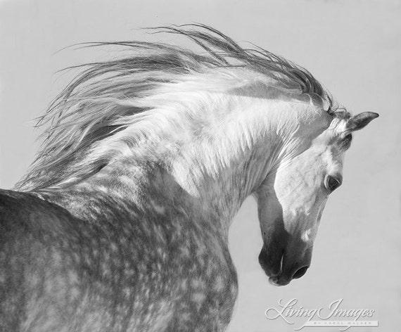 u00c9talon espagnol jette sa t u00eate photographie dart cheval