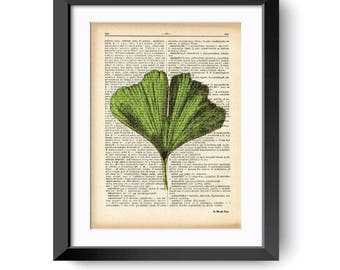 Ginkgo biloba leaf print-ginkgo biloba wall art-ginkgo biloba-home decor-nature print-garden print-rustic print-botanical print-NATURA PICTA