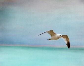 Seagull Beach Art Print - Aqua Blue Soft Pastel Surreal Ocean Beach House Sea Bird Wall Art Home Decor Photograph