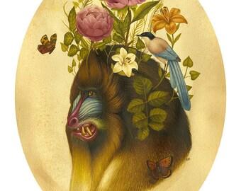 Monkey Print - Dolens Fecund - Limited Edition print - Natural History Monkey
