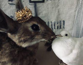 Vintage Taxidermy Rabbit Hare Antique Rare