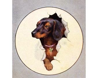 Dachshund Card | Dog Bursts Through Greeting Card