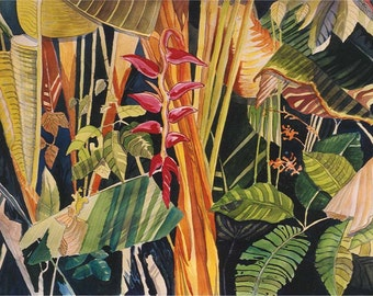 La Paloma Rainforest : Limited Edition Print, Costa Rica series