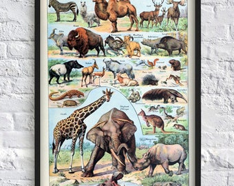 Elephant giraffe print animals print art science illustration zoology poster wall art decor vintage book plate print boy girl room decor