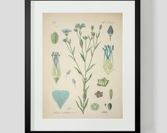 Botanical Print Plate 317