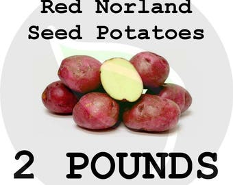 2 Lbs Red Norland Seed Potatoes - 2018 Spring - CERTIFIED SEED POTATO - Ready 4 Garden Planting!! - Non-Gmo Heirloom
