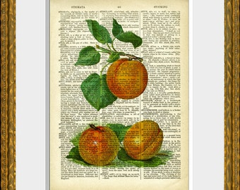 PEACHES 02 recycled book page art print - an antique dictionary page with a retooled antique fruit illustration - upcycled kitchen vintage