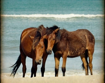 Horse Photography, Wild Horses Print, Mustangs, Coastal Art, Ocean Water Photo, Sand, Summer, Vacation, Beach Cottage Decor  -   Mare & Colt