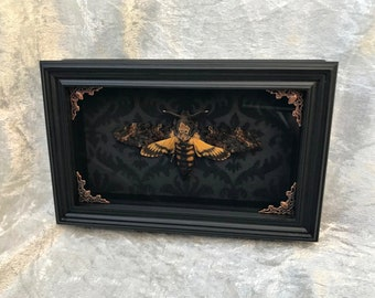 Real Death's Head Hawkmoth: Silence of the Lambs