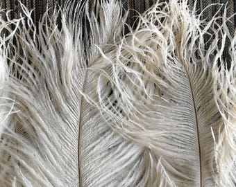 DELICATA PLUMES FRINGE ,Ivory, Light Cream  / 2028